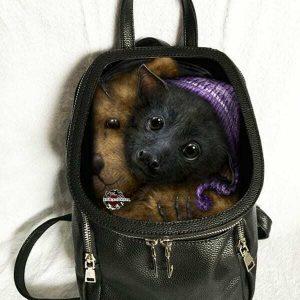 """Baby Bats""  She Black Dragon - 3D Lenticular Fashion Backpack - Gothic Cute"